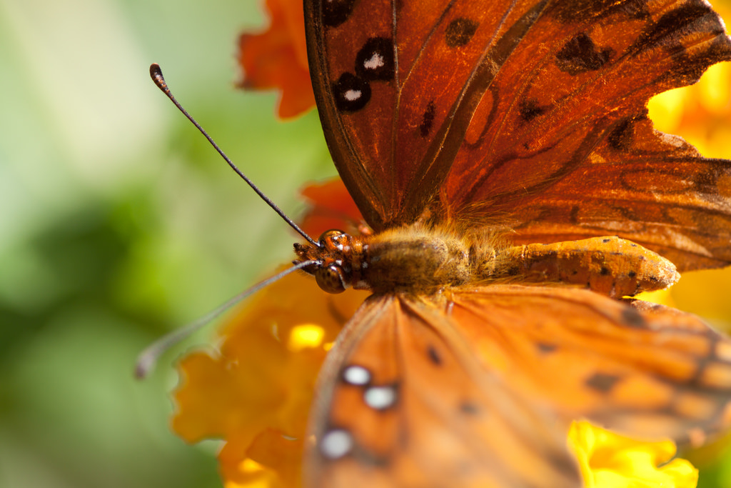 butterfly by thematthewknot