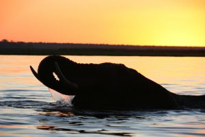 Elephant sunset by Jon Rawlinson-web
