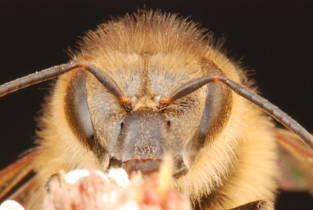 Honey Bee by Mike Keeling