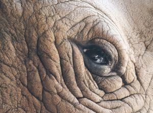 Eye of the Rhino