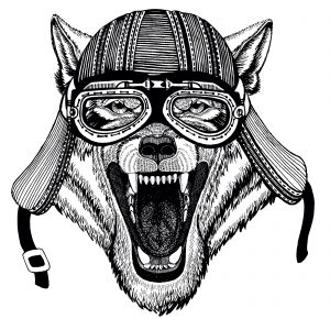wolf wearing motorcycle helmet and goggles
