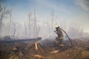 Fireman in burnt out forest